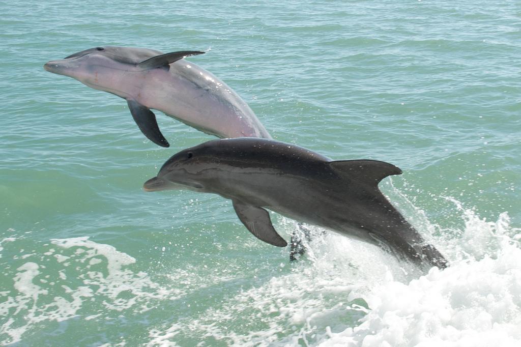 Baño con delfines